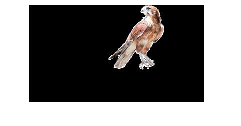 logo_Falco